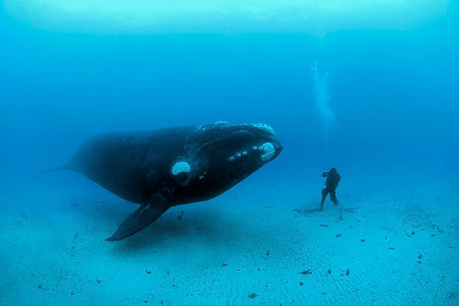 Whale and man